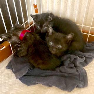 No.2 黒猫 三姉妹