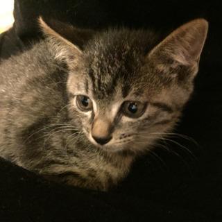 生後1カ月程の仔猫