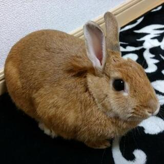 ウサギを引き取っていただけるかた、いませんか!
