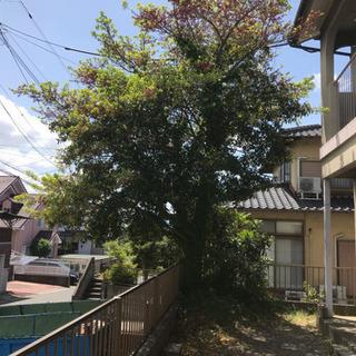 福岡大木切ります 大きな木きります 伐採 植木撤去 草刈り 除草...