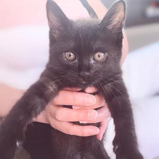 推定2ヶ月の黒猫(♂)くんの里親募集!(堅田から近い方優先です)