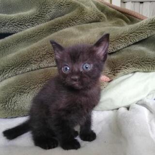 【急募】子猫3匹の里親募集