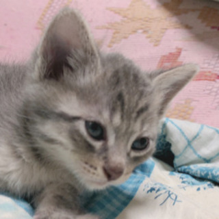 子猫の里親さん