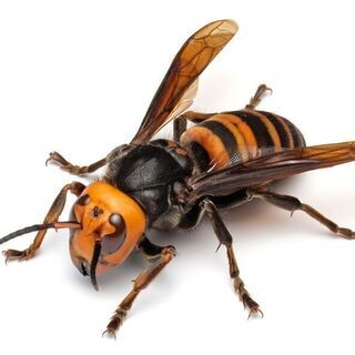 【迅速対応!害虫・害獣駆除】蜂の巣・ゴキブリ・ネズミなど