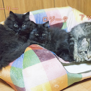 住み込みOK! [寮完備] 1日3時間程度の猫のお世話をお願いします。