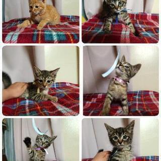 愛らしい仔猫や愛おしいオトナっ仔たちとお幸せに♡