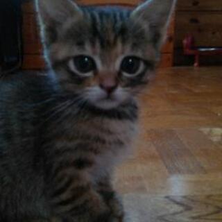 『募集停止中』仔猫の里親さんを探してます!