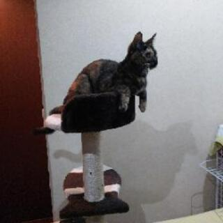 <お話し中>急募   1才2カ月の猫2匹の里親さん