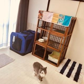 猫お預かりホテル 猫の部屋 猫ちゃんお預かり