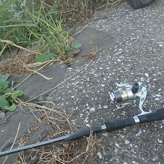 釣り仲間募集・多摩川沿いで釣りをします!鯉、鮒、鱒、鯰、鯊、手長エビ