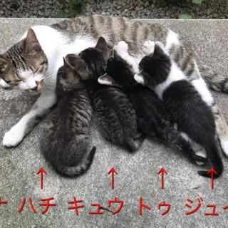 【里親様大募集】母猫(約7ヶ月)+子猫4匹(約1ヶ月)