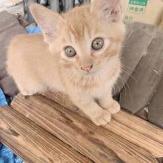 生後2~3ヶ月の子猫ちゃんの里親さん募集中です(^^)