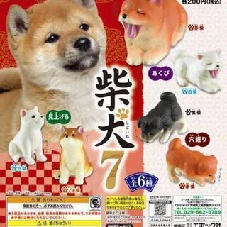 【新品】 柴犬7 3種セット