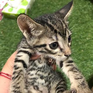 生後1ヶ月ぐらい子猫5匹