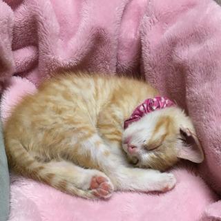 子猫꙳★*゚元気な男の子꙳★*゚家族になって下さい!! − 栃木県