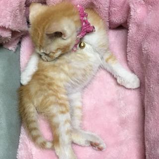 子猫꙳★*゚元気な男の子꙳★*゚家族になって下さい!! - 足利市