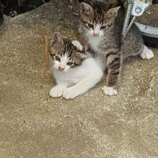 2匹共、生後2ヶ月の雄です
