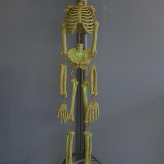 光る骸骨 吊り下げ型 等身大 人体骨格模型  SKELETON ...