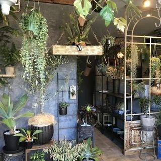 おしゃれな花屋でアルバイト💚未経験者歓迎💚植物、雑貨などの販売スタ...