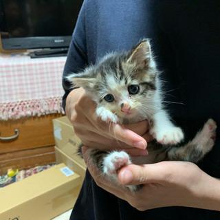 生後約1ヶ月の子猫