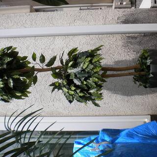フェイクグリーン観葉植物