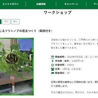 東急ハンズ新宿店でツリシノブ(釣り忍)の苔玉ワークショップを開催