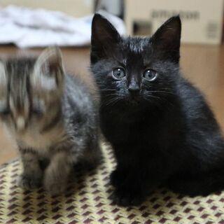 子猫の里親を募集しています。