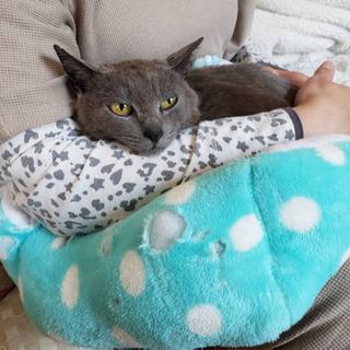 お母さん猫と子猫を一緒に里親様募集