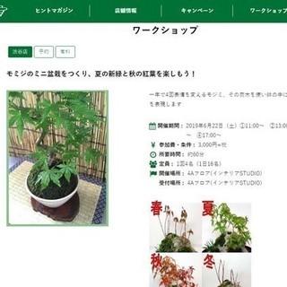 東急ハンズ渋谷店で「モミジのミニ盆栽をつくり、夏の新緑と秋の紅葉...