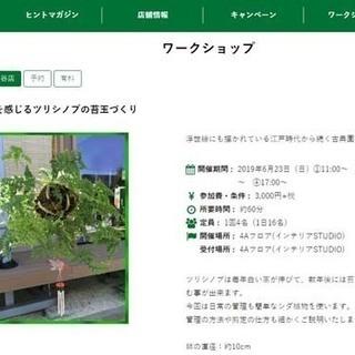 東急ハンズ渋谷店で「涼を感じるツリシノブの苔玉づくり」ワークショ...