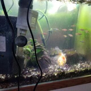熱帯魚飼育水槽セット、水槽+ライト+外部フィルター+水中フィルター...