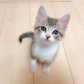 珍しい毛色の子猫(※トライアル中につき一時募集打ち切ります)