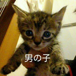5月生まれ子猫の里親さん募集