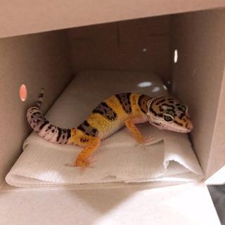 爬虫類&小動物好き集まれ!