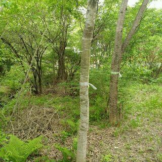 ☆樹木さしあげます☆(木工の材料や薪にいかがですか?)