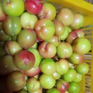 無農薬、自然栽培プラム