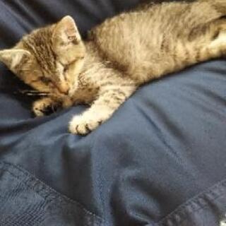 ハンデ有り(盲目) 生後7〜8週ぐらい子猫