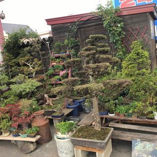 盆栽、ミニ盆栽、ガーデニング用品