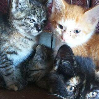 生後2ヶ月の子猫の里親様募集