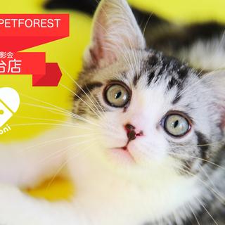 【PETFOREST 若葉台店】7月20日(土)  petomon...