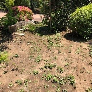除草、庭の手入れ