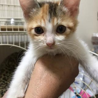 かわいい三毛猫の女の子です★