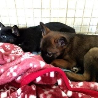 🆘保健所収容!怖がりな子犬ちゃん2匹助けを待っています!【県外譲渡可】