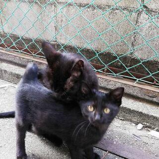 親猫1匹、子猫1匹(保護or里親)