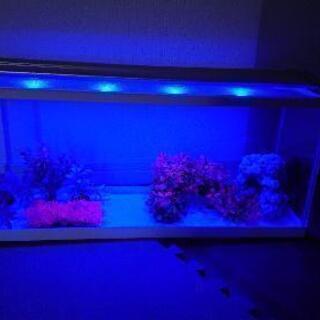 水槽フルセット LED三段階変化 熱帯魚
