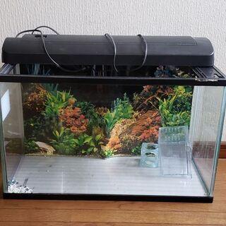 幅60cmの水槽と付属品セット