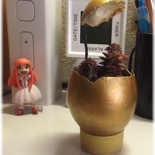【多肉植物】『茜の塔』の金色タマゴ入り◝(⑅•ᴗ•⑅)◜..°♡