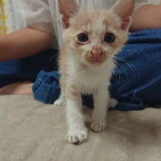 【里親募集】一ヶ月くらいの子猫ちゃんです