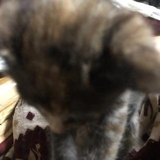 野良猫が産んだ仔猫(2ヶ月)→焦げ茶色