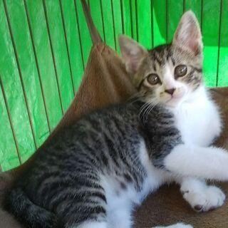 2匹の子猫ちゃんの家族募集